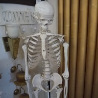 Skeleton Oddities
